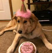 Organic Any Occasion Birthday Cake For Dogs