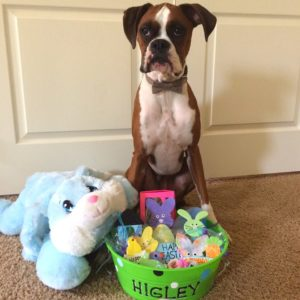 Easter Gifts and Treats For Dogs