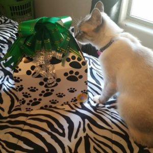 Cat Birthday Gifts