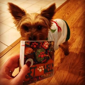 Dog Get Well Treats & Gifts