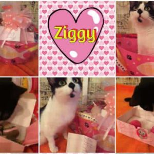 Valentine's Day For Cats