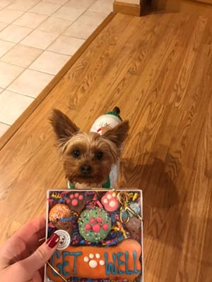 cute dog with get well treats from pampered paw gifts