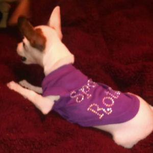 Tee Shirts For Dogs