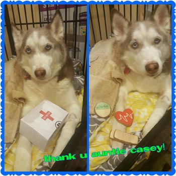 Tikaani with get well gift from pampered paw gifts