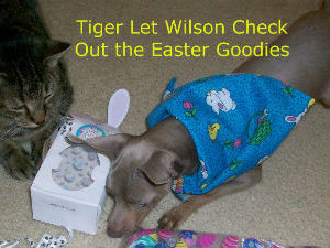 Easter Treats and Gifts For Cats