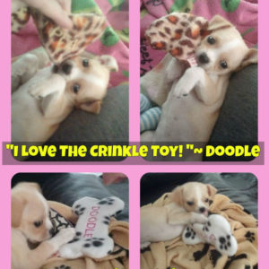 Cracklin Personalized Dog Toy - Fleece Crinkle Toy doodle