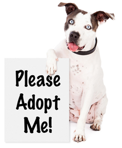 Dog With Adopt Me Sign