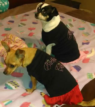Birthday Dresses For Dogs