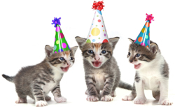 Cute Cats Wearing Birthday Hats