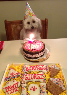 Birthday Cakes For Dogs: Treats to Show How Much You Love Them