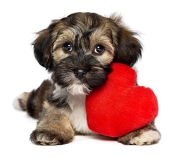 Cute Dog with Heart Shaped Toy