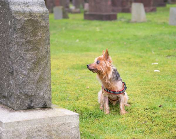 Dog in Front of Tombstone