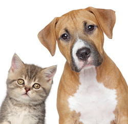 Cute Dog and Cat