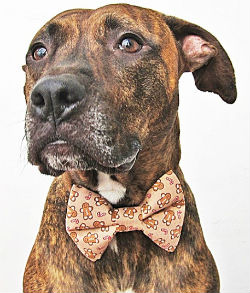 Christmas Bow Ties for Dogs