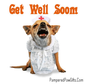 Get Well Dog Gifts
