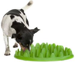 dog bowls for fast eaters