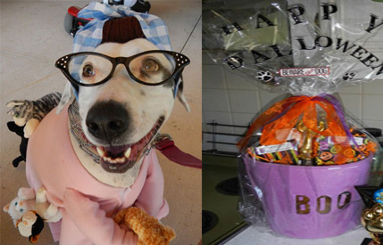 winner of the Dalmatian Rescue Tampa Dalloween costume contest receives a Pampered Paw Gifts custom Halloween Gift Basket