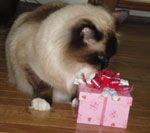 happy cat with birthday treats from pampered paw gifts