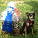 Ziggy winner of $15 Gift cert from Pampered Paw Gifts