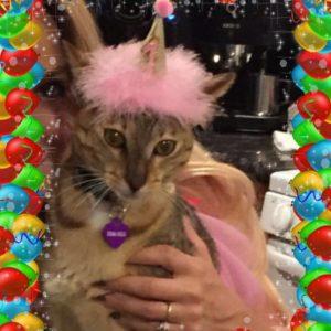 Cat Birthday Hats