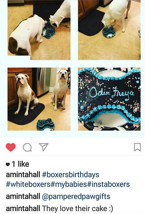 Large Bone Shaped Dog Birthday Cake