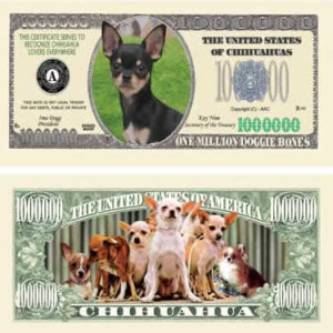 Chihuahua front bill
