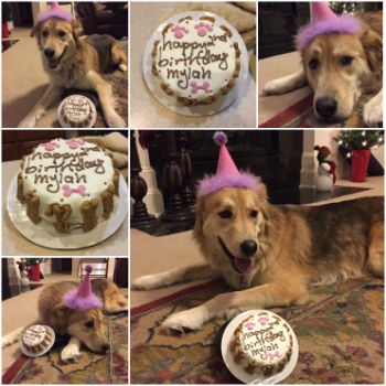 Mylah with a birthday cake from pampered paw gifts