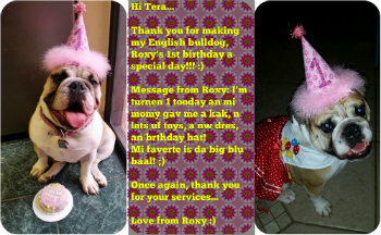 Roxy English Bulldog birthday cake from pampered paw gifts