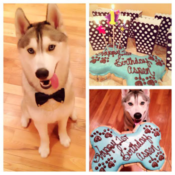 Aspen celebrates birthday with cake from pampered paw gifts