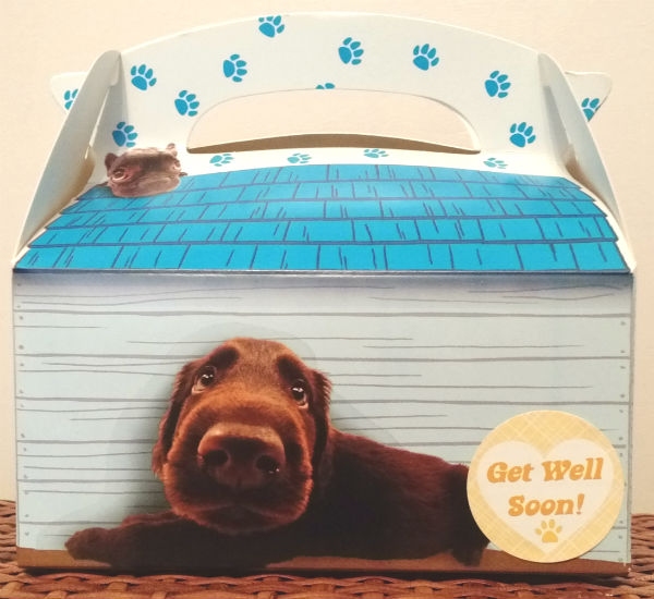 Unique Get Well Soon Gable Box Dog Gift»Pampered Paw Gifts GP51