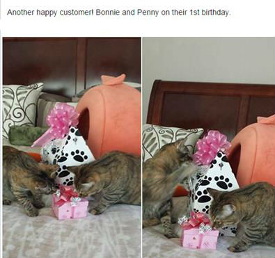 cats Bonnie and Penny celebrate 1st birthday with treats from pampered paw gifts