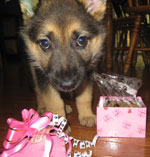 cute puppy with treats from pampered paw gifts