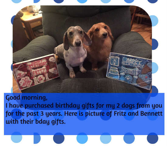 2 beautiful dogs with birthday treats from pampered paw gifts