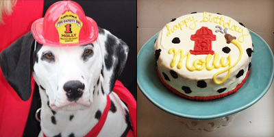 Molly the fire safety dog with a custom birthday cake from pampered paw gifts