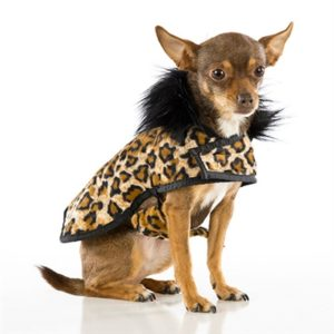 Soft Leopard Print Posh Puppy Coat