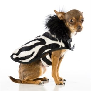 Soft Zebra Print Posh Puppy Coat
