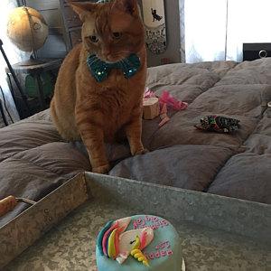 Organic Catnip And Tuna Or Chicken Cat Birthday Cakes