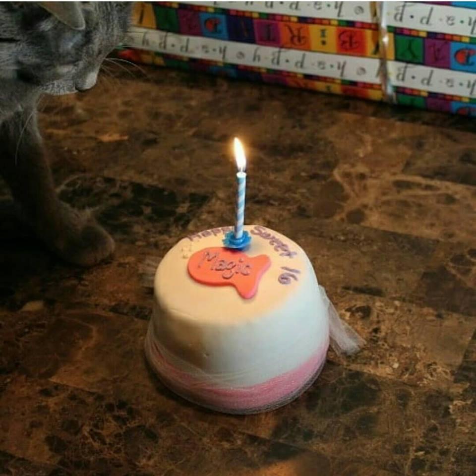Organic Catnip And Tuna Or Chicken Cat Birthday Fish Cake