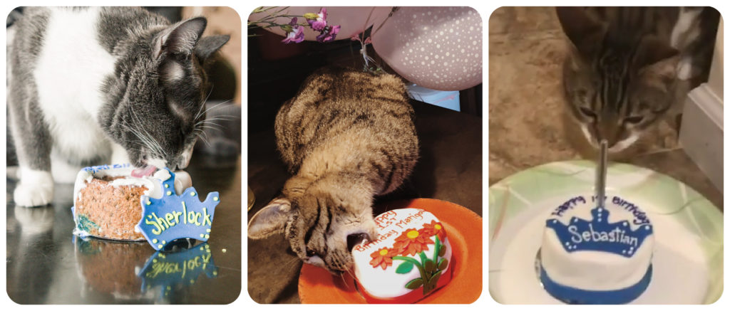 Birthday Cakes For Cats